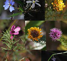 Maandowie Bush Reserve  ~  Loftus, NSW, Australia by Robert Elliott