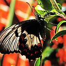 A Butterfly In My Garden by Evita