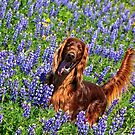 Wild in the Lupine by Ann J. Sagel