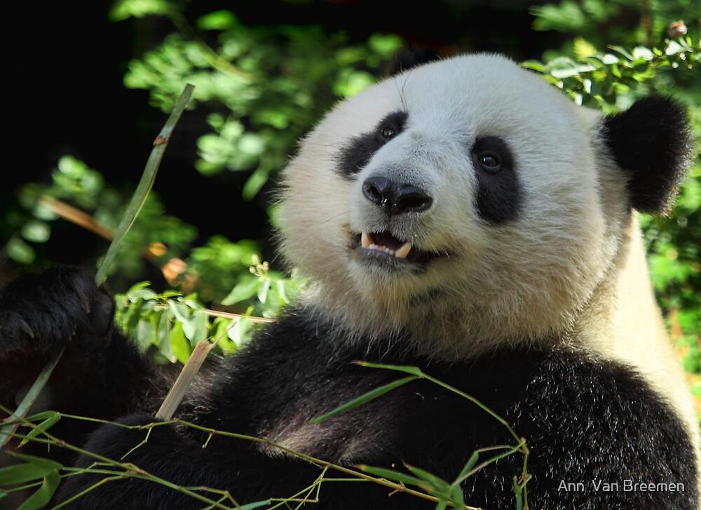 Panda Joy by Ann  Van Breemen