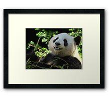 Panda Joy Framed Print