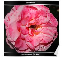 Roses are also PINK my dear Poster