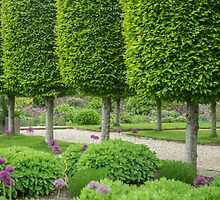 Avenue of topiary by Judi Lion