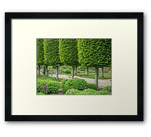 Avenue of topiary Framed Print