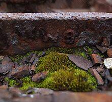 Rust & Moss by woodlandninja