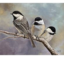 Three Little Chickadees Photographic Print