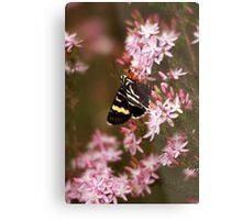 Butterfly bliss. Metal Print