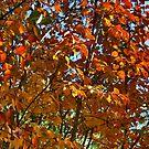 Autumn ... ... ... by Nira Dabush