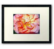 Lovely As A Summers Day................. Framed Print