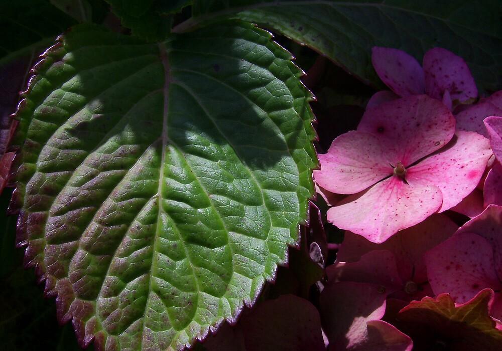 Big Leaf One by Yvonne Carsley