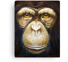 primate-chimpanzee Canvas Print