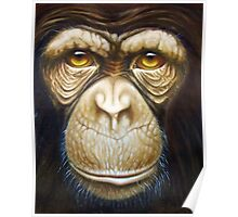 primate-chimpanzee Poster