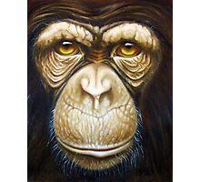 primate-chimpanzee Photographic Print