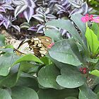 Butterfly on Flowers by aura2000