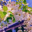 Flowering tree with white flowers by Hikaru Yagi