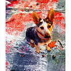 Urban Puppy, an ACD and a skate ramp. by Amphitrite