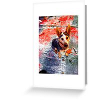 Urban Puppy, an ACD and a skate ramp. Greeting Card
