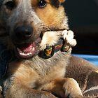The Puppy & The Yummy Stick. by Amphitrite
