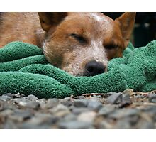 Let Sleeping Dogs Lay. Photographic Print