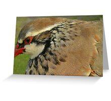 Red Legged Partridge Greeting Card