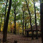 Autumn in North park, Pennsylvania by Carol Smith