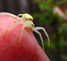 Itsy Bitsy Spider by Chuck Gardner