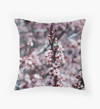 Spring......2009, Apple blossoms Throw Pillow