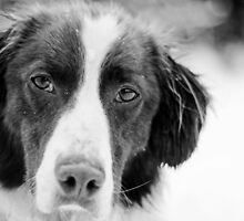 Ben, Sprollie (Black and White) by thegreendogs