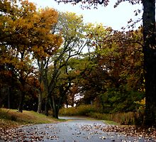 Autumn Drive In The country by Linda Miller Gesualdo