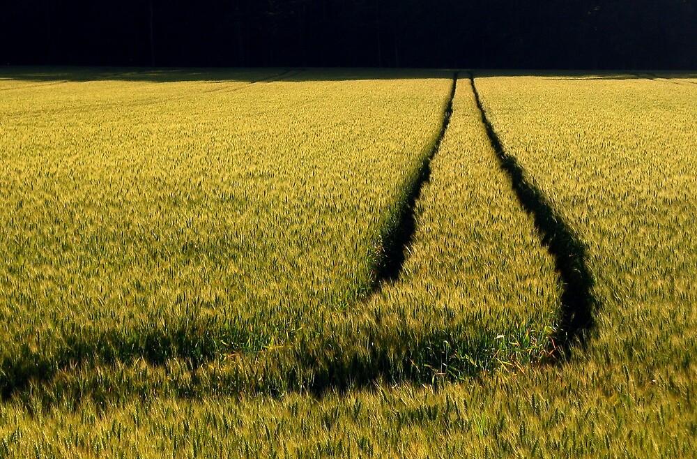 Fields of Slovenia by Fin Gypsy