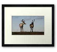 Arctic Circle, Norway Framed Print