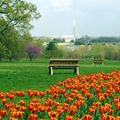 Washington DC - Spring Time by bkphoto