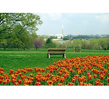 Washington DC - Spring Time Photographic Print