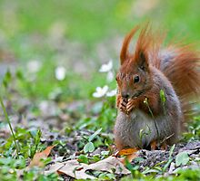 Spring Squirrel Photography 2 by seawhisper
