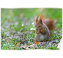 Spring Squirrel Photography 2 Poster