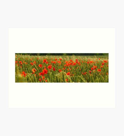 Fields of Hungary Art Print