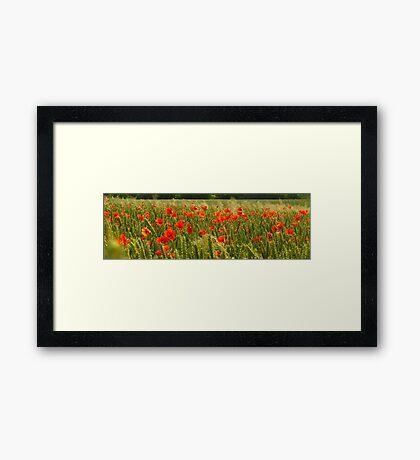 Fields of Hungary Framed Print