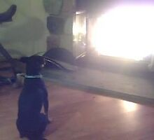Dog hypnotized by fire! by Lori Youngblood