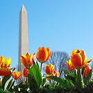 Washington Monument - Spring Time by bkphoto
