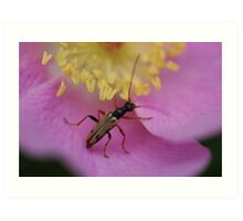 Bug on Flower Art Print