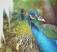 Cuban Peacock by cryoflaughter