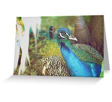 Cuban Peacock Greeting Card
