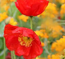 French Poppies by Eileen McVey