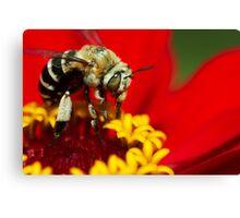 Honeybee macro on red Canvas Print