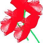 Poppies by Vitta