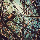 Robin by Fanboy30