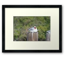Can I stop saying awww now Doc?? Framed Print
