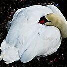 The Sleeping Swan by Lyndy