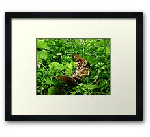 Partridge 2 Framed Print