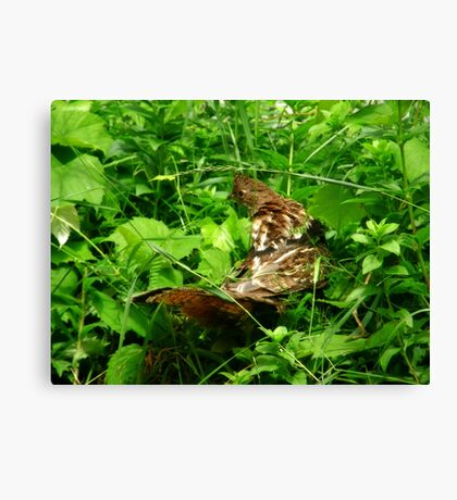 Partridge 2 Canvas Print
